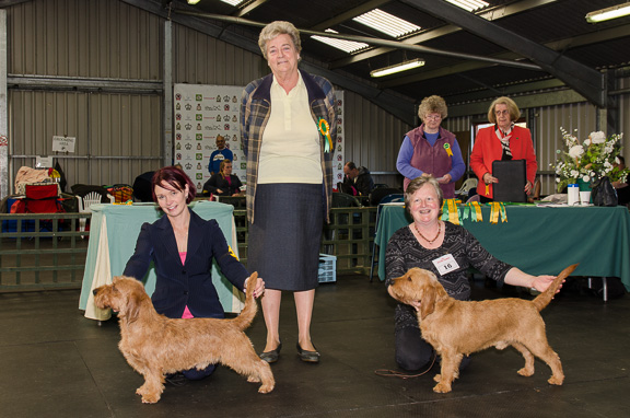 Tid reserve best dog at the Club show 2012 - photo copyright john hubble, verrere