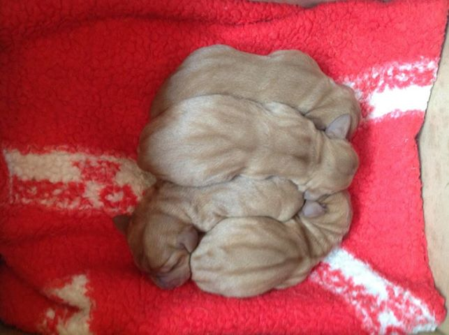 the new arrivals, a day old.